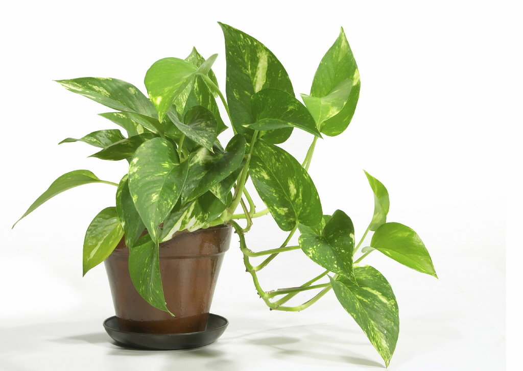names of common house plants