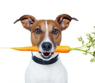 Gør din hund glad med sund hundefoder